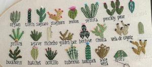 кактусы цветы 12