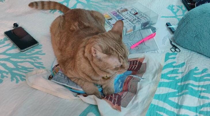 кот на вышивке